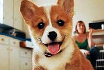 Too Cute!! / by Devyn Frazier