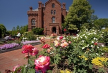 Kathrine Dulin Folger Rose Garden / The Kathrine Dulin Folger Rose Garden, made possible by a generous gift from Mr. and Mrs. Lee M. Folger and the Folger Fund, was designed and installed by the Smithsonian Gardens and dedicated in the fall of 1998. It is a visual centerpiece in front of the Arts and Industries Building to the east of the Smithsonian Castle.