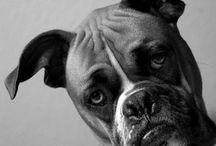Dogs / by Megan Hale