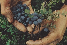 Berries and other foods. / by ☯ BERIT