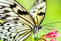 Kellli's butterflies