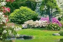 Domy, dvorky, zahrady