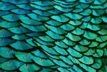 Turquoise / by Kaitlyn Gendemann