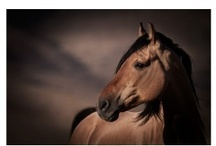Horses! / by Casi Flordeliza
