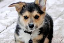 Puppies! / by Liz