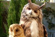 FELT | NF birds & fowl / Needle felted birds, chickens, ducks, etc