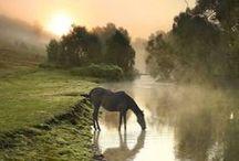 ART | Western & Equine