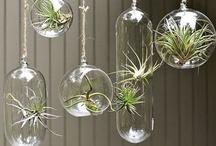 Succulents, Air Plants, Tufas, Terrariums & Moss