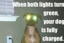 Doggie ~ Funnies