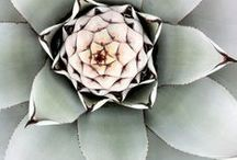 #FLEURS / Botanic, Flowers & Nature