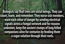 plant trees the air we breathe