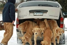 who let the dogs out? / by Kathy Cramer