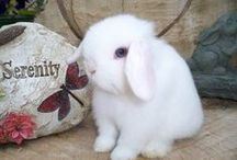 Bunny Love / Total unconditional love :o) / by Julie Ann Hurt