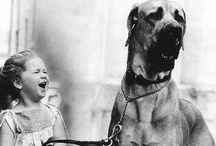 Couer de Canine  / It's all about the heart of us, the heart of dog, how they join in limbic resonance.