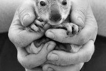 Photography: Cute Animals