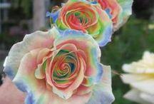 Favorite Flowers / by Julie Ann Hurt