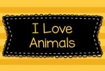 I Love Animals / Cute pictures of animals, just for fun!  Visit me at www.heidisongs.com, and on my blog at http://heidisongs.blogspot.com!