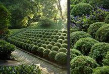 Garden plants, plant combinations, perennials, annuals, trees, shrubs, vines etc. / plants, trees, flowers etc. / by Janet Lohman