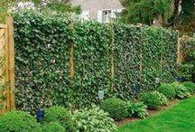 Garden - Screens, Privacy & Trellis / by Drew It Yourself - D.I.Y.