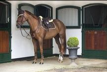 FOR THE HORSE / Here you will find all the equipment you need for your horse! Saddles, rugs, halters, bridles, saddle pads and a lot more!