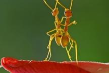 Bugs / by Sharon Jurado