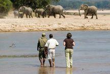 Iris in Afrika / In november 2012 heb ik Zambia bezocht, een prachtig land.