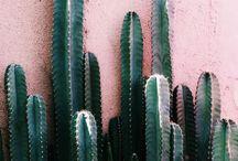 Green Thumb / Urban gardening and DIY garden projects