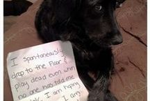 Dawg Shaming / The things dogs do...