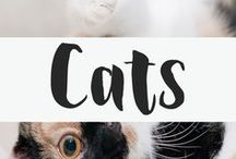 Cats / Cats are my favorite animal, hands down.  This board may contain affiliate links. *cat*kitty*kitten*kittens*cat pictures*funny cat pictures*cat diy*