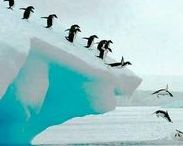 travel [ Antarctica ] / Antarctica bucket list, things to see in Antarctica, things to do in Antarctica, places to visit in Antarctica, Antarctica attractions