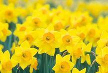 Aunt Beryl's Flower Garden / Flowers
