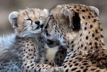 I want a(n) <insert animal here>!!