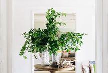 Indoor Arboretum / Trees make the perfect home decor.
