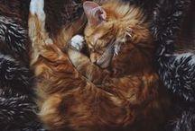 Kitties / big, small, tiny, fluffy, chunky cats