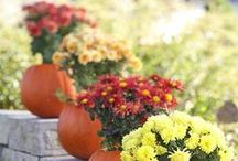 Fall Decor / Fall decorations, fall front doors, fall tables, fall everything!