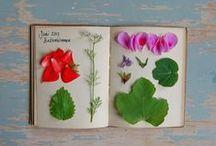 journal: garden