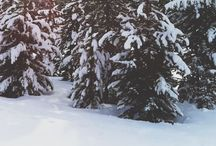 Favorite Time of Year❄ / by Mallori Archey