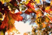 Autumn. / My favourite season. / by Janice Chan
