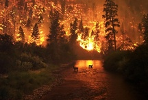 Wildfire - World Natural Disaster / Wildfires are an uncontrolled fire burning in wildland areas. Common causes include lightning and drought but wildfires may also be started by human negligence or arson. They can be a threat to those in rural areas and also wildlife.