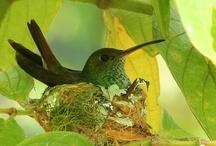 Birds / by Anita Freeman