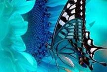 Butterflies / by Anita Freeman