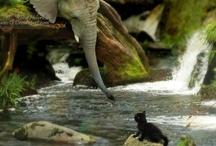 Animals / by Anita Freeman