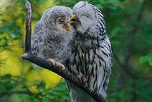 Owls and birds / by Carol Sauer