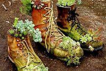 The herbs garden