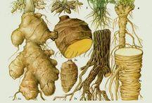 botanicus etc. / Animalia, Protista et cetera