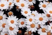 Fleurs / Plants and the like