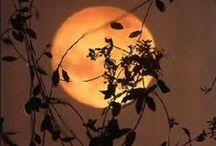 Halloween - It's Eerie-sistable / The Simply Spooktacular Season!