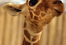 Life's A Zoo / by Hunter Church