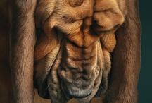 Bark! / by Eric Brandenburg