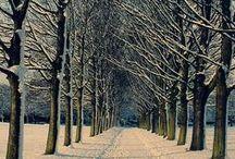 Winter Wonderland / by Hannah Cybul
